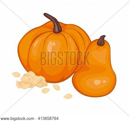 Pumpkins In Carton Style With Pumpkin Seeds. Isolated Object. Vector Illustration.vegetable From The