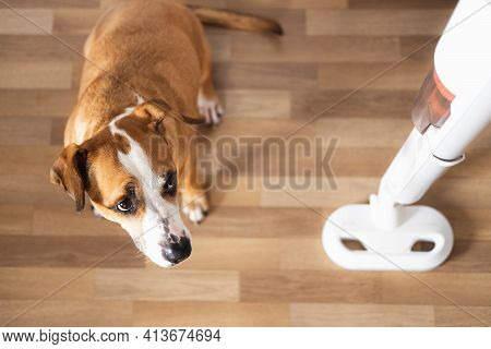 Dog Looks At A Vacuum Cleaner. Pets With Household Objects, Puppy Is Afraid Of A Loud Vacuum Cleaner