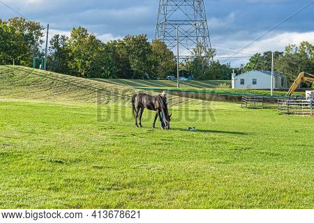 New Orleans, La - September 28: A Horse, A Woman, A Cat Pause At The Foot Of The Mississippi River L