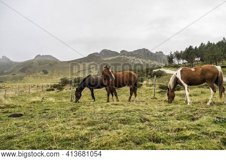 Landscape With Horses On The Road Of The Picos De Europa, Asturias And Cantabria In Spain