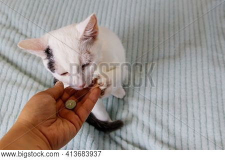 White Cat Getting A Pill From Female Hand. Concept Of Taking Medicines Or Vitamins For Animals, Vete