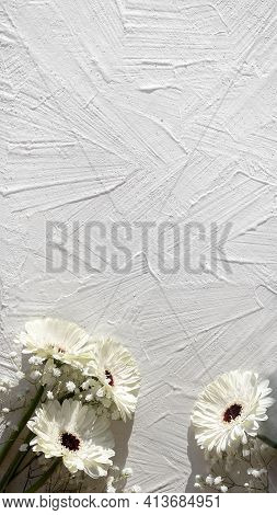 White Gerberas On Off White Textured Background With Copy Space, Place For Your Text. Off White Gerb