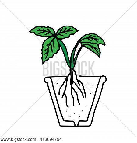 Green Outline Hand Drawing Vector Illustration Of A Small Strawberry Plant With Roots Transplanting