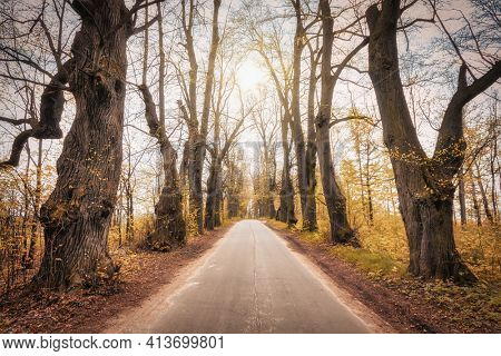 Asphalt road in the autumn alley