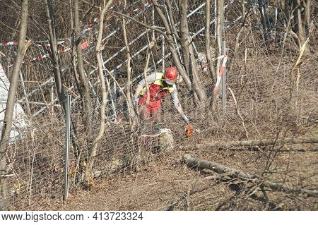 Tree Felling And Logging In The Forest
