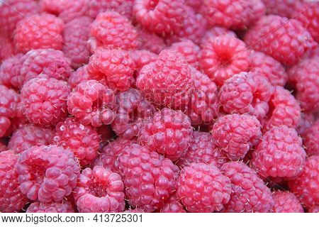 Red Berries Of Raspberry In Heap. Pile Of Ripe Berries Close Up. Tasty And Useful Red Raspberry. Ric