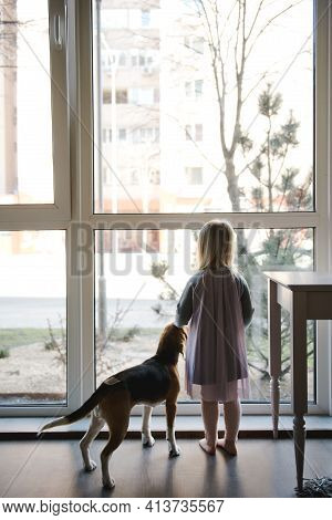 Young Girl And Her Dog Looking Out The Window. Beagle, English Beagle.