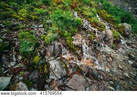 Scenic Landscape With Many Clear Spring Water Streams Among Thick Moss And Lush Vegetation. Mountain