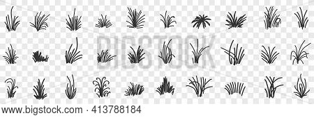 Grass Natural Pattern Doodle Set. Collection Of Hand Drawn Various Growing Bunches Of Grass Natural