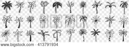 Exotic Palm Trees Doodle Set. Collection Of Hand Drawn Various Shapes And Styles Of Southern Exotic
