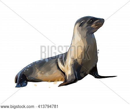 Sea Lion, Seal From A Splash Of Watercolor, Colored Drawing, Realistic