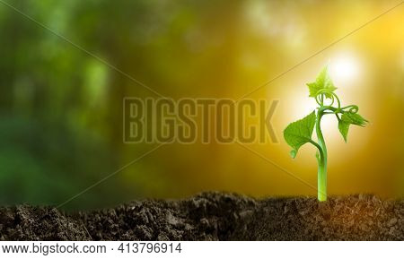 3d Illustration Renewable Energy Concept Earth Day Or Environmental Protection Protect The Forests T