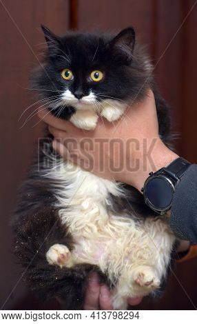 Furry Black And White Furry Cat Young In Arms