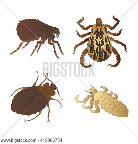 Set With Insects Isolated On White Background. Bed Bug, Flea, Louse And Mite.  Element For Design. V
