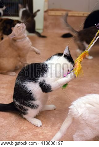 Cute Playful Cat Playing Catches Standing On Its Hind Legs