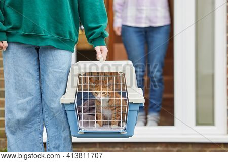 Person Collecting Kitten Bought From Private Breeder During Health Pandemic