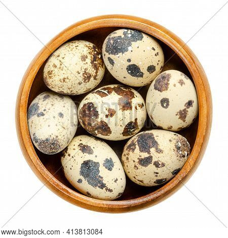 Group Of Fresh Quail Eggs In A Wooden Bowl. Speckled, Whole Eggs Of Common Quail, Coturnix Coturnix,