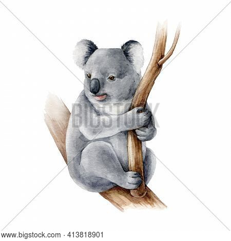 Koala Bear Watercolor Illustration. Australia Symbol Cute Koala Bear On A Tree Branch. Native Austra