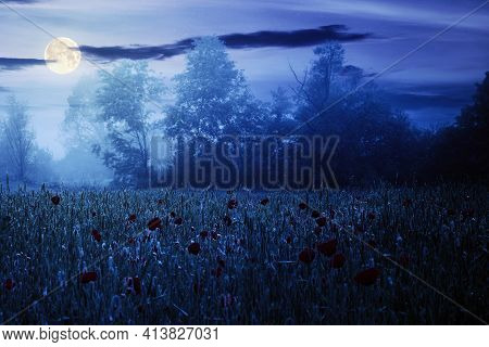 Red Poppy Field In The Mist At Night. Beautiful Rural Landscape In Summer Full Moon Light. Mysteriou