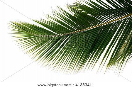 Branch Palm Tree