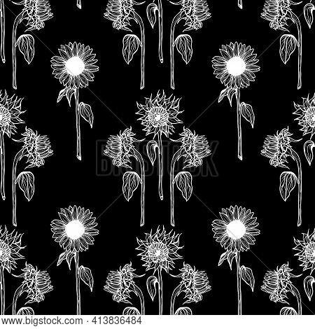 Seamless Pattern White Sunflower Flower Line Art On Black Background Illustration Of A Sunflower. Ha
