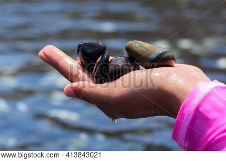 A Woman Holding Beautiful Smooth Black Stones On The Palm At Koh Hin Ngam, Satun Province, Thailand