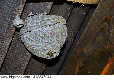Empty Wasp's Nest Stuck To The Wooden Door Of The Shed, Close Up