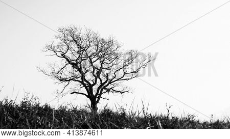 Silhouette of a single leafless tree in winter season, dark trunk and branches against sunny bright sky, black and white photography