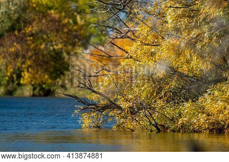 Yellow autumn trees hang over the river. Astrakhan Region, Russia