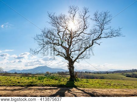 A single leafless tree in winter backlit by the sun, La Rhune mountain in the background, French Basque country, France