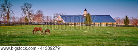 Thoroughbred Horse Grazing At Early Dawn In A Field.