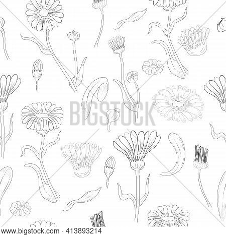 Seamless Pattern Made Of Calendula Branches, Flowers And Leaves. Hand Drawn, Contour Only Marigold I