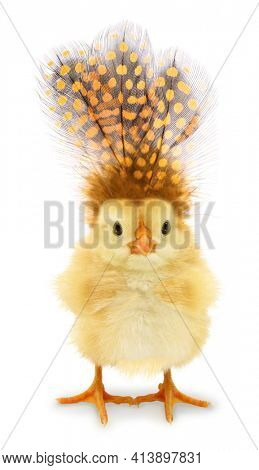 Cute chick with strange feathers on top of head funny conceptual photo