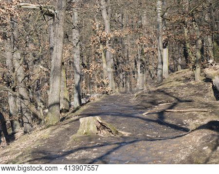 Narrow Foot Path In Kunraticky Les Forest Park With Bare Trees Early Spring Sunny Day. Prague, Czech
