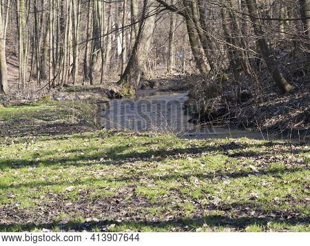 View Of Small Spring Stream In Kunraticky Les Forest Park With Bare Trees Early Spring Sunny Day. Pr