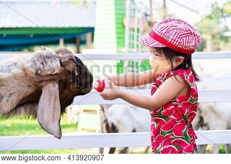 Child Raise Farm Animals. Children Feed Goats With Milk. Kids Wear Red Hat To Protect From The Hot S
