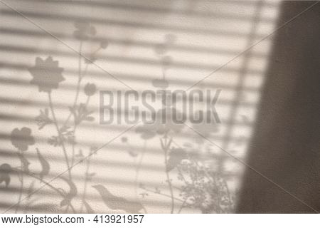 Background with floral field and window shadow