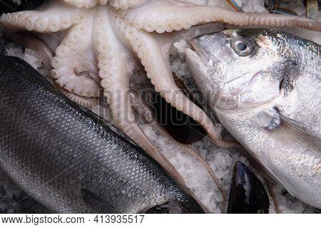 Seafood On Ice. Blue Crab, Dorado, Cuttlefish, Mussels On Ice