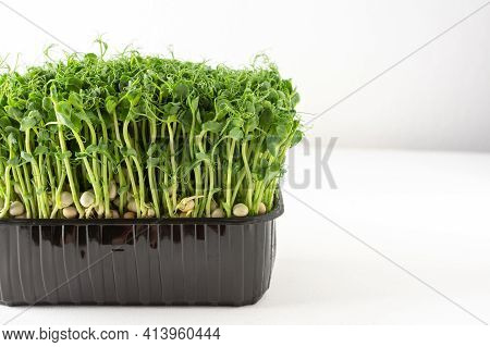 Useful Microgreens Sprouted Peas
