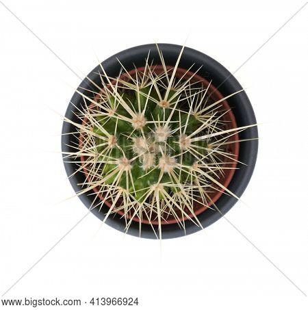 Overhead view of cactus plant pot.