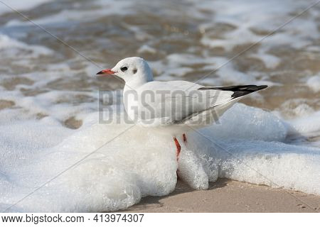 Seagull standing on yellow sand and water