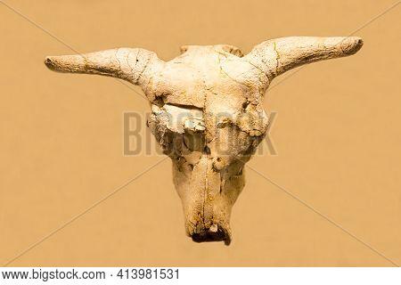 The Skull Of Adjiderebos (latin: Adjiderebos Cantabilis) Is Isolated On A Light Background. Paleonto
