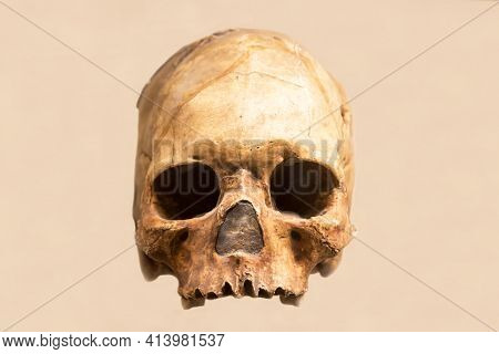 The Skull Of A Modern Homo Sapiens (latin: Homo Sapiens L.) Is Isolated On A Light Background. Paleo