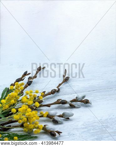 Mimosa And Willow On Gray Background. Branches Of Mimosa And Willow On Wooden Background.