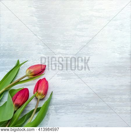 Three Red Tulips On A Light Background. Tulips On A Gray Background.