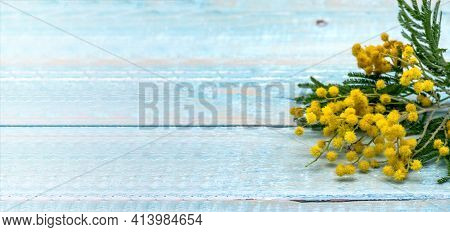 Wooden Blue Background And Yellow Mimosa. Mimosa Branch On A Wooden Background.