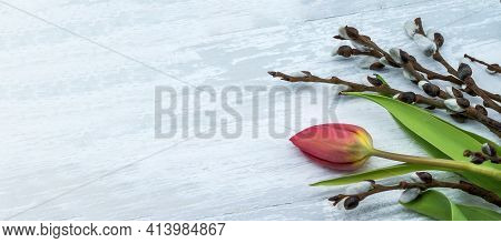 Red Tulips And Fluffy Willow On Light Background. Tulips And Willow On Gray Background.
