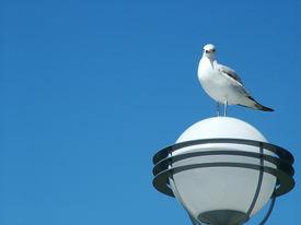 Gull Watching