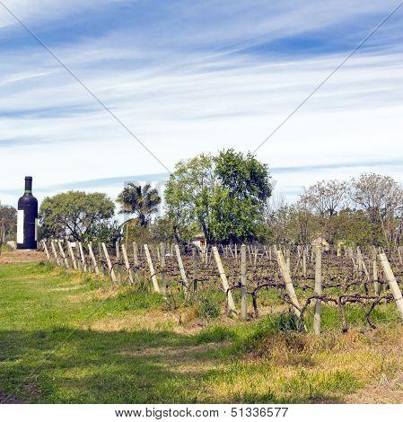 The Wine Walk, Uruguay