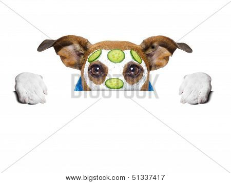 wellness dog behind banner with a cucumber mask poster